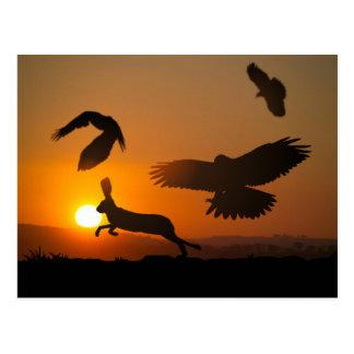 Harris Hawks Postcard