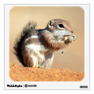 Harris's antelope squirrel (Ammospermophilus) Wall Sticker