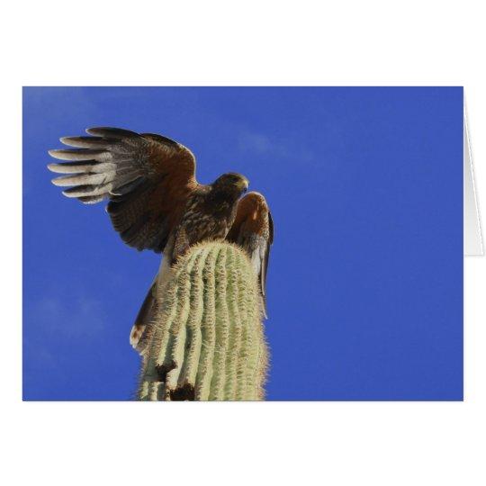Harris's Hawk perched atop Saguaro Cactus Card