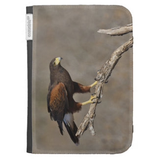 Harris's Hawk perched raptor Kindle Covers