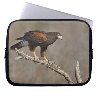 Harris's Hawk perched raptor Computer Sleeve