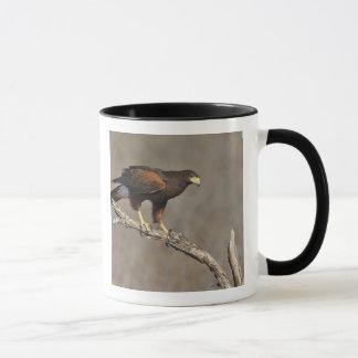 Harris's Hawk perched raptor Mug