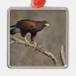 Harris's Hawk perched raptor Square Metal Christmas Ornament