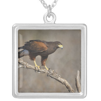 Harris's Hawk perched raptor Silver Plated Necklace