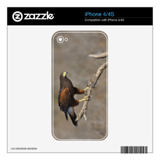 Harris's Hawk perched raptor Decals For The iPhone 4S