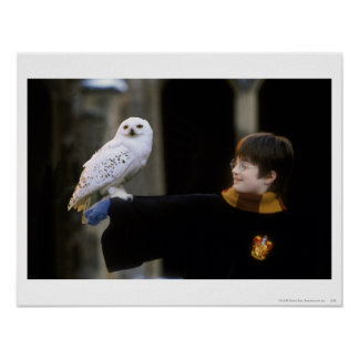 Harry and Hedwig 3 Poster