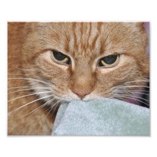 Harry el gato del jengibre fotografia