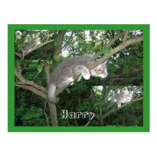 Harry el gato que sube un árbol postal
