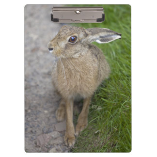 Harry Hare Clipboard