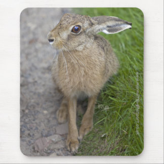 Harry Hare Mousemat Mouse Pad