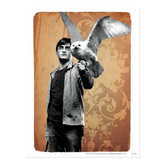 Harry Potter 12 Postcard