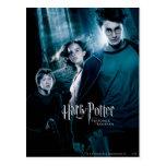 Harry Potter Ron Hermione en bosque Postal
