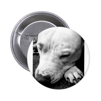 harry potter scar dog white pit bull button
