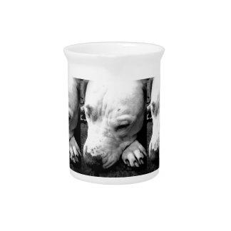 harry potter scar dog white pit bull pitcher