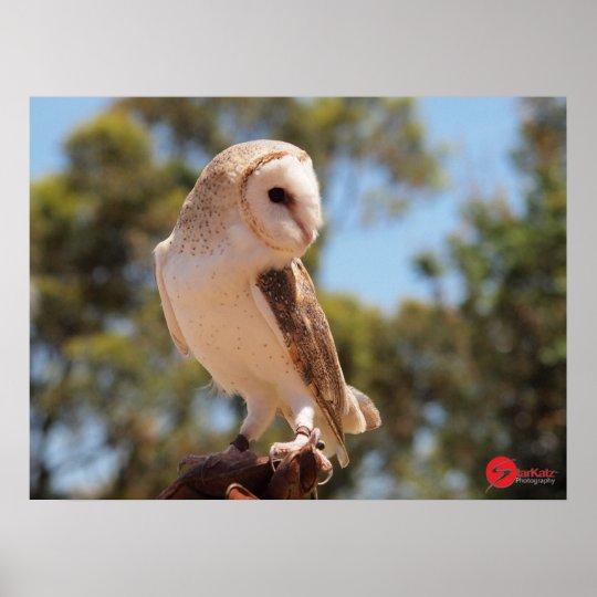 Harry's Owl Poster