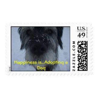 HarrySnownose felicidad… está adoptando un perro