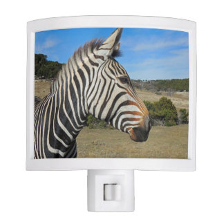 Hartmann's Zebra Profile at Fossil Rim Night Light