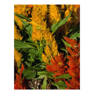 Harvest Colors gift Collection Letterhead