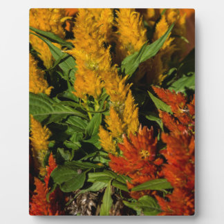 Harvest Colors gift Collection Photo Plaque
