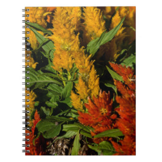 Harvest Colors gift Collection Spiral Notebooks