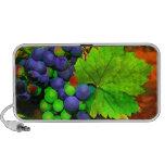 Harvest Grapes Speaker