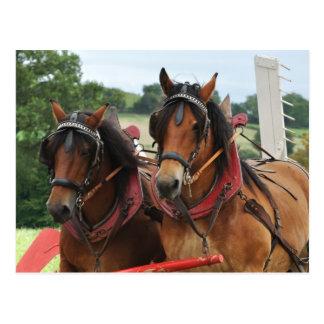 Harvest horse team photo postcards