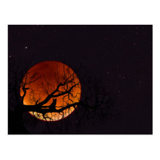 Harvest Moon with Tree and Cat Silhouette Postcard