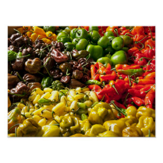 Harvest of Chilies Poster