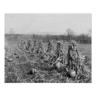Harvest Season, 1906. Vintage Photo Poster