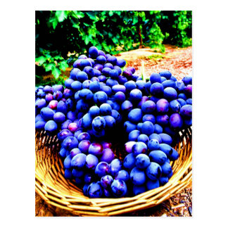 Harvest season seedless grapes fruit postcard