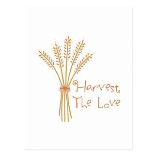 Harvest The Love Postcard