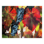 Harvest Time Grapes and Leaves Posters