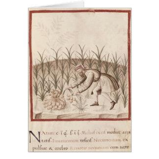 Harvesting Garlic Card