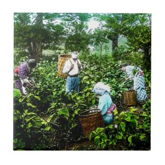Harvesting Green Tea Leaves Old Japan Farmers Ceramic Tile