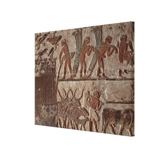 Harvesting papyrus and a group of cows stretched canvas prints