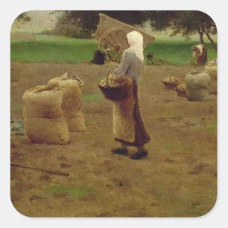 Harvesting Potatoes Square Sticker