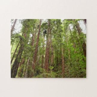 Hasta secoyas en el monumento nacional de maderas rompecabezas con fotos