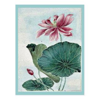 Hasu - lotus / by Megata Morikaga Ukiyo-e. Postcard