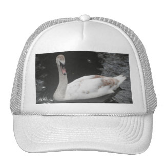 Hat Baby Swan