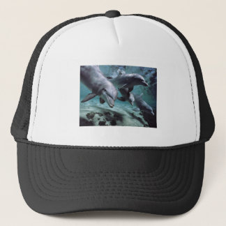 Hat - Dolphin Images