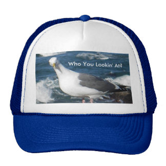 Hat Looking Gull