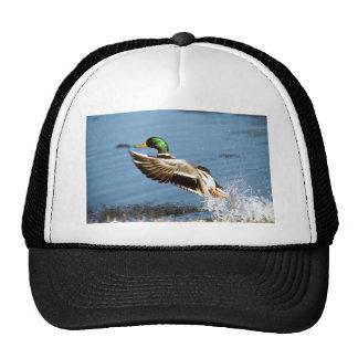 Hat / Mallard Duck