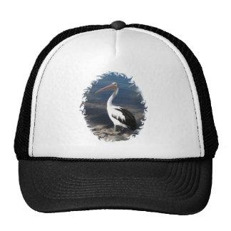 HAT - Pelican