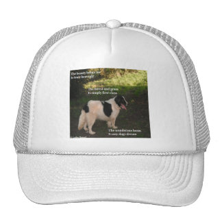 Hat Poem Poem Any Dogs Dream By Ladee Basset