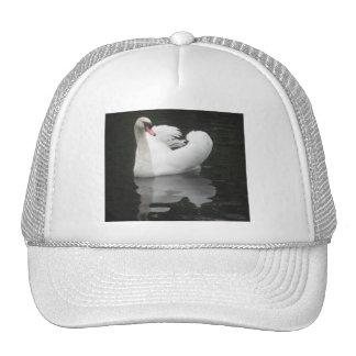 Hat Swan Swimming