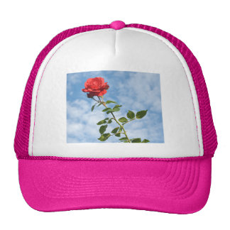 Hat with a Single Red Rose