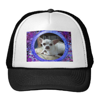 Hat With Chihuahua