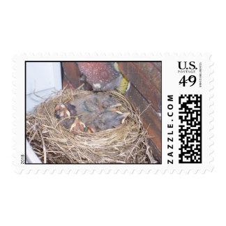 Hatched Birds in Nest Postage