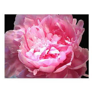 Hatched Pink Peony Postcard