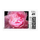 Hatched Pink Peony Stamp